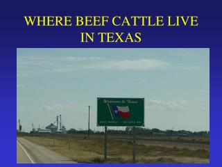 WHERE BEEF CATTLE LIVE IN TEXAS