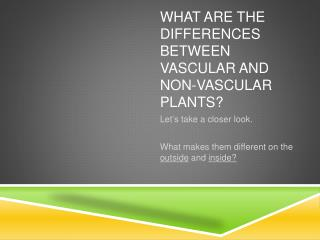 What are the differences between Vascular and non-Vascular Plants