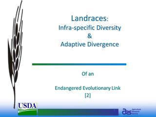 Landraces:  Infra-specific Diversity    Adaptive Divergence