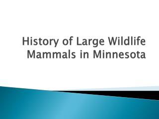 History of Large Wildlife Mammals in Minnesota
