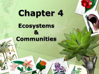 Ecosystems    Communities