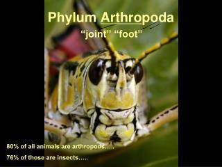 Phylum Arthropoda     joint   foot