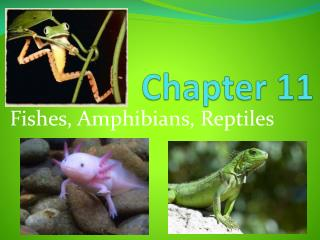 Fishes, Amphibians, Reptiles