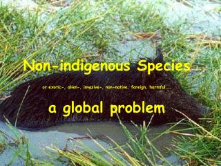 Non-indigenous Species   or exotic-, alien-, invasive-, non-native, foreign, harmful... a global problem