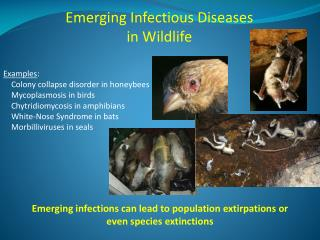 Emerging Infectious Diseases in Wildlife