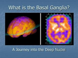 What is the Basal Ganglia       A Journey into the Deep Nuclei