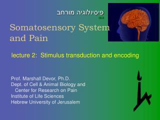 Somatosensory System and Pain