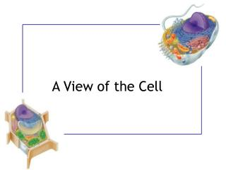 A View of the Cell