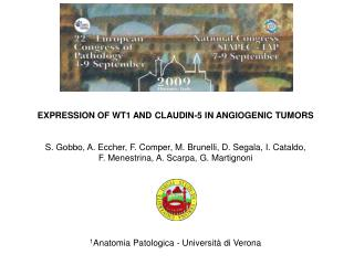 EXPRESSION OF WT1 AND CLAUDIN-5 IN ANGIOGENIC TUMORS    S. Gobbo, A. Eccher, F. Comper, M. Brunelli, D. Segala, I. Catal