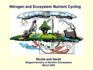 Nitrogen  nutrient cycling