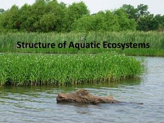 Structure of Aquatic Ecosystems