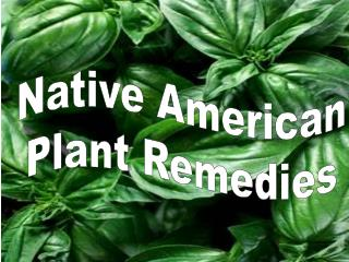 Native American  Plant Remedies
