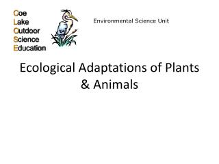 Ecological Adaptations of Plants  Animals