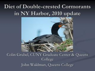 Diet of Double-crested Cormorants in NY Harbor, 2010 update
