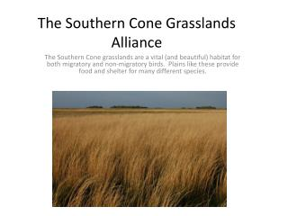The Southern Cone Grasslands Alliance