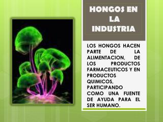 HONGOS EN  LA INDUSTRIA