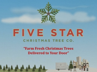 Five Star Christmas Tree Deck