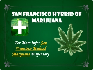 San Francisco Hybrid of Marijuana