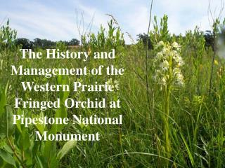 The History and Management of the Western Prairie Fringed Orchid at Pipestone National Monument