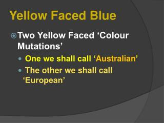 Yellow Faced Blue