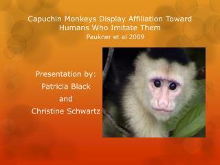 Capuchin Monkeys Display Affiliation Toward Humans Who Imitate Them  Paukner et al 2009