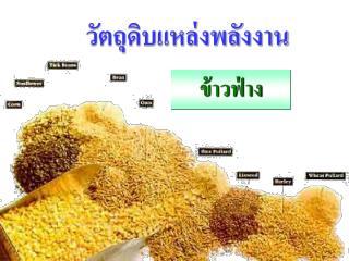 Sorghum grain