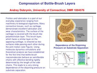 Compression of Bottle-Brush Layers  Andrey Dobrynin, University of Connecticut, DMR 1004576