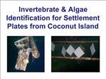 Invertebrate  Algae Identification for Settlement Plates from Coconut Island