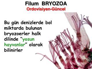 Filum  BRYOZOA Ordovisiyen-G ncel