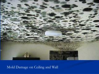 Mold Damage on Ceiling and Wall