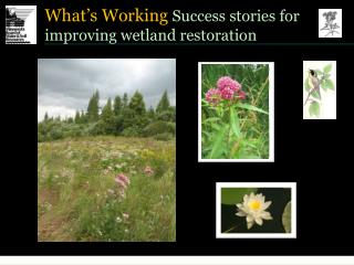 What s Working Success stories for improving wetland restoration