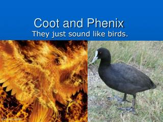 Coot and Phenix