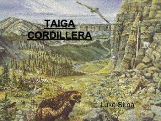 Taiga Cordillera