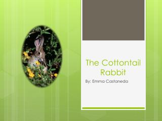 The Cottontail Rabbit