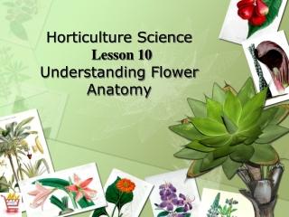 Complete flower:    Sepals    Petals     Stamens male    Carpel female