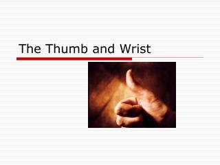 The Thumb and Wrist