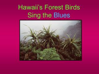 Hawaii s Forest Birds       Sing the Blues