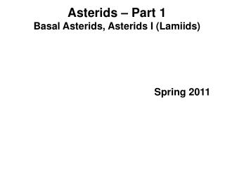 Asterids   Part 1 Basal Asterids, Asterids I Lamiids