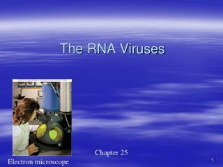 The RNA Viruses