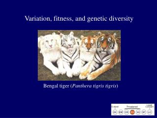 Variation, fitness, and genetic diversity