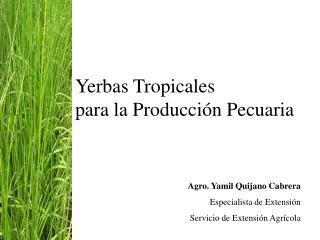 Yerbas Tropicales   para la Producci n Pecuaria