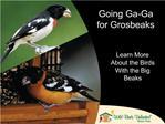 Going Ga-Ga for Grosbeaks
