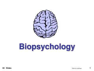 Ppt introduction to biopsychology psb 4002 powerpoint for Mirror neurons provide a biological basis for