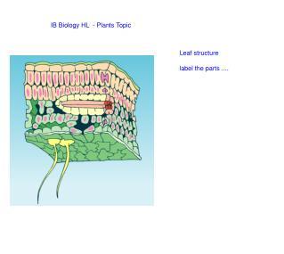 IB Biology HL  - Plants Topic