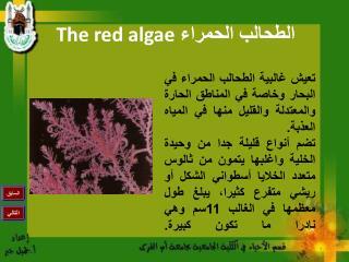 The red algae