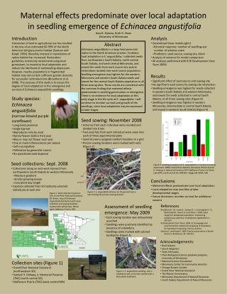 Maternal effects predominate over local adaptation  in seedling emergence of Echinacea angustifolia  Amy B. Dykstra, Rut