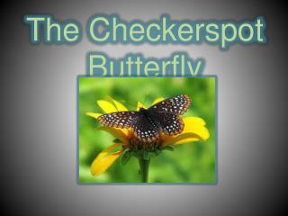 The Checkerspot Butterfly