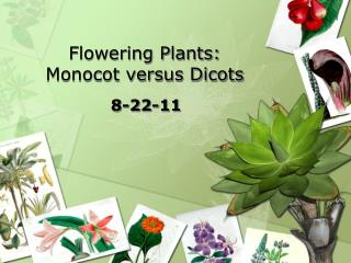 Flowering Plants: Monocot versus Dicots