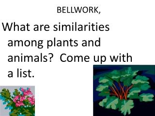 Vegetative Parts of Plants