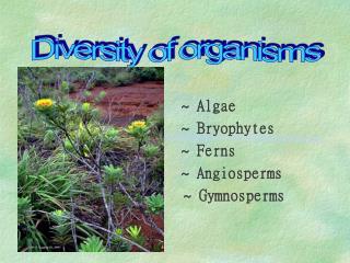Algae                    Bryophytes                    Ferns                    Angiosperms               Gymnosperms